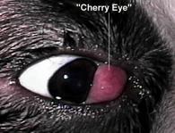 Chery Eye boxer