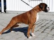 Dogs4All Norsk Vinnerutstilling 14.11.2014 - Norsk Kennel Klub - Norsk Vinner 2014