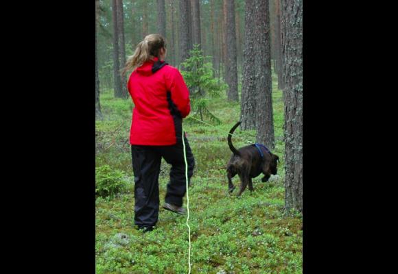 NBKs avdeling Oslo og Akershus arrangerer sporstevne klasse D