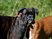 28.09.2014 Horten Hundeklubb