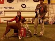 Harstad 04.10.2014 - Norsk Kennel Klub - BIR Valp - 1BIG