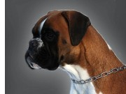 Dogs4All Nordisk Vinnerutstilling 16.11.2014 - Norsk Kennel Klub - 2BTK - Cert - Norsk Championat