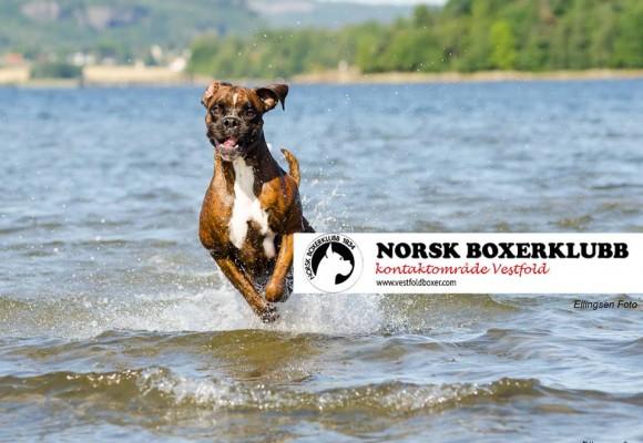 Husk ordinær påmeldingsfrist lørdag 8. august for NBK sin spesialutstillingen i Vestfold