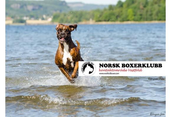 Norsk Boxerklubb kontaktområde Vestfold inviterer til spesialutstilling 29.08.2015