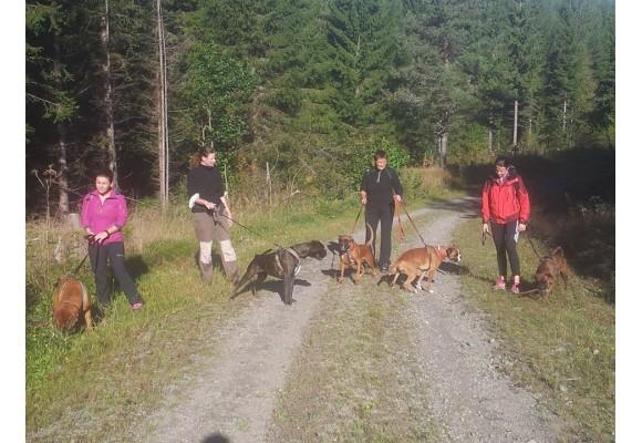 Norsk Boxerklubb avdeling Telemark