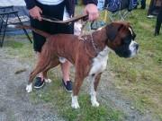Leangen 04.07.2015 - Norsk Kennel Klub - CACIB, BIM