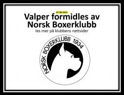 Valpeformidling logo