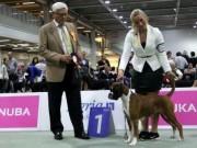 Lillestrøm 05.09.2015 - NKK European Dogshow 2015 - BIR - Europeisk Vinner 2015