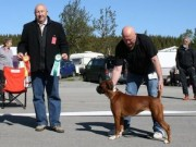 Bodø 11.06.2016 - Norsk Boxerklubb avd. Nordland - BIM