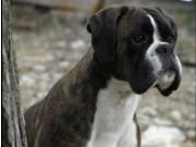 Lillestrøm 20.11.2016 - Dogs4All/Norsk Vinnerutstilling 2016 - BIM, NV-16