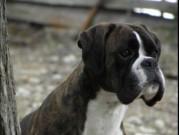 Sølen 12.07.2016 - Norsk Brukshundsports Forbund - Mentalbeskrivelse - MH