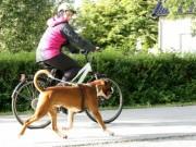 Mo i Rana 24.08.2016 - Norsk Schæferhundklubb avd. Helgeland - RIK utholdenhetsprøve