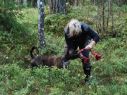 Trøgstad 25.09.2016 - Norsk Boxerklubb avd. Oslo og Akershus - Mentalbeskrivelse - MH,