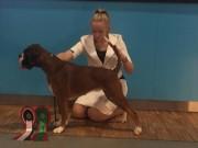 Lillestrøm 20.11.2016 - Dogs4All/Norsk Vinnerutstilling 2016 - CERT, Norsk Utstillingschampion