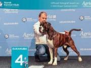 Lillestrøm 20.11.2016 - Dogs4All/Norsk Vinnerutstilling 2016 - BIR, NV-16, 4.BIG