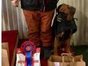 Gran 26.11.2016 - Hadeland Hundeklubb - Rallylydighet klasse 2