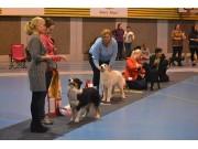Ikke glem Norsk Boxerklubbs Valpeshow for ALLE raser 12.02.2017 i Drammen Hundepark