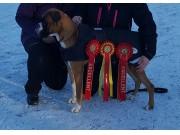 Bø i Telemark 14.01.2017 - Sandefjord Hundeklubb - BIR Junior