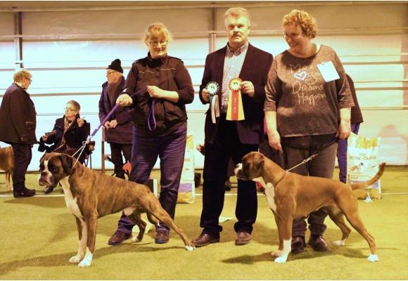 Solbergelva, Drammen Hundepark 11.02.2017 - Norsk Boxerklubb Oslo og Akershus - BIR og BIM