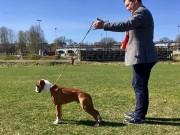 Moss 01.05.2017 - Moss og Omegn Hundeklubb - BIR Valp