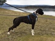Kragerø 30.04.2017 - Kragerø Hundeklubb - Mentalbeskrivelse MH