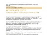 Weisse Boxer Zucht Testpaarungen -  2012