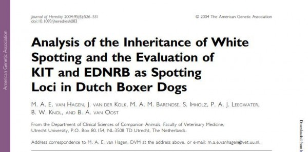 Analysis of the Inheritance of White Spotting and