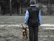 Stavsøra 14.06.2017 - Nidaros Brukshundklubb - RIK Ferdselsprøve BH