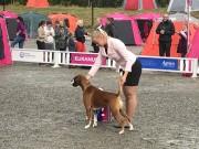 Lillehammer 20.08.2017 - Norsk Kennel Klub - CACIB BIM