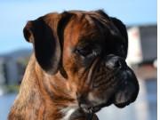 Horten 10.09.2017 - Horten Hundeklubb - Rallylydighet klasse 1