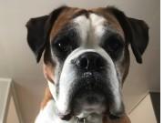 Enebakk 24.09.2017 - Flateby Hundeklubb - Rallylydighet klasse 1