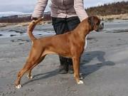 Lillestrøm 19.11.2017 - Norsk Kennel Klubs Vinnerutstilling Dogs4All - Norsk Veteranvinner 2017