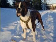 Gran 27.01.2018 - Hadeland Hundeklubb - Rallylydighet klasse 2