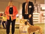 Solbergelva, Drammen Hundepark 11.02.2018 - Teverica's Ps I'll Be Back - Exc. BIR Veteran