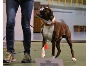 Horten 05.05.2018 - Nilas av Boxerhuset - Rallylydighet klasse 1