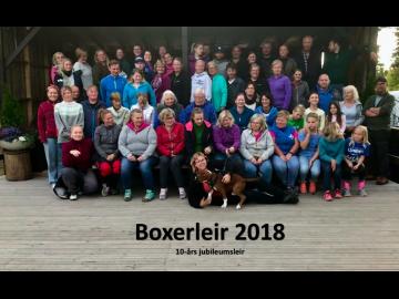 En vellykket Boxerleir 2018 er over - 30. juni åpnes det for påmelding 2019