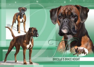 Bricilla's Brace Height - Multi