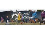 Velkommen til Norsk Boxerklubb avd. Telemark spesialutstilling lørdag 28. august 2021