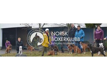Nå nærmer det seg første frist for påmelding til NBK Telemark sin utstilling 25.08.2018 i Skien