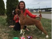 Våler i Solør 21.07.2019 - Rexob Miss Norway - CERT BIR