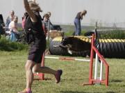 Hønefoss 08.06.2019 - Venceremos Arco Erato - Agility - Bestått Bronsemerke