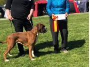 Roskilde, Danmark 11.05.2019 - Kronion's Dixi Darling - CACIB BIR Internasjonal Championat
