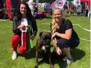 Vejen, Danmark 22.06.2019 - Portofino Nostrum - 2.BTK CERT Res.CACIB Dansk Champion Norsk Utstillingschampion