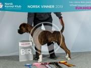Lillestrøm 15.11.2019 - Rexob Quiz King - CERT - NordiskCERT BIR - Norsk Vinner - Norsk Juniorvinner