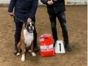 Viborg, Danmark 23.11.2019 - Hearts Of Hope's Thunderbird '55 - Dansk Champion BK Klubchampion