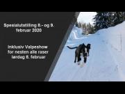 Informasjon og PM'er for NBK sine utstillinger i Drammen hundepark 8.- og 9. februar 2020
