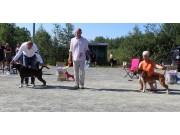 Norsk Boxerklubbs Trøndelag sin spesialutstilling 27.06.2020 - Presentasjon av vinnerne