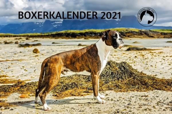 Boxerkalender 2021