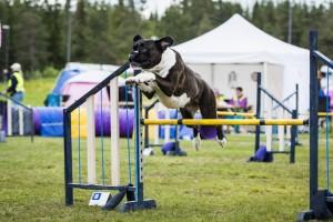 Boxerhaven's Linnea - hopp 2020