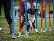 Lillehammer 15.08.2020 - Boxerhaven's Linnea - Agility 1L - Very Good